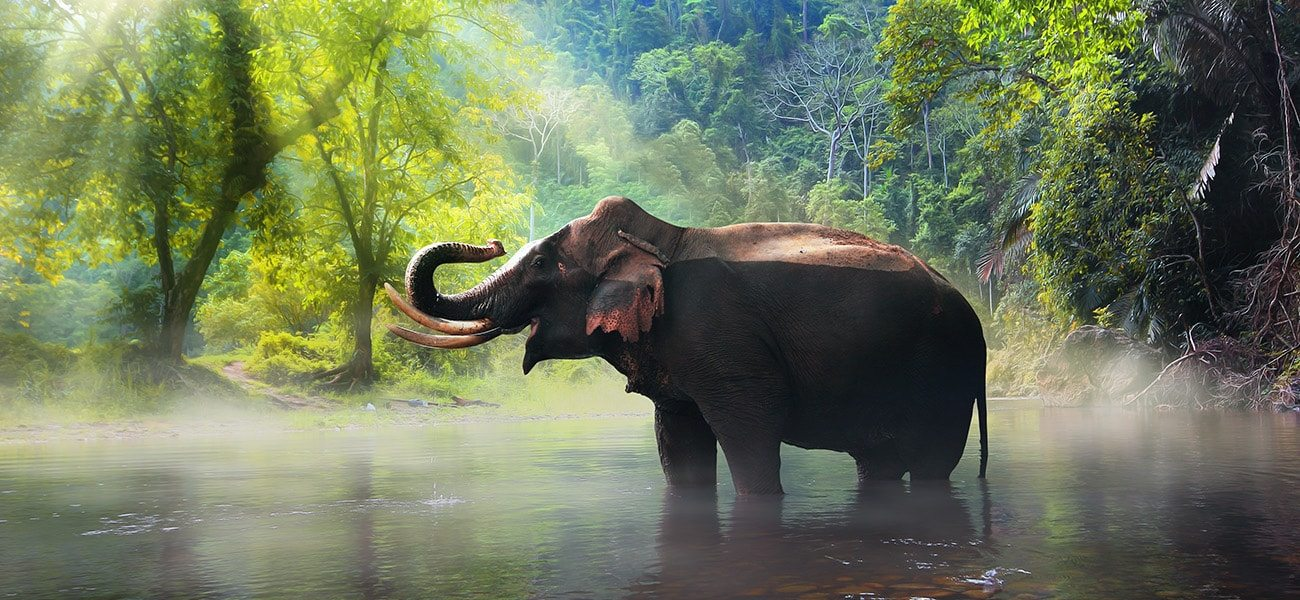 Elephant, Thailand, Asia