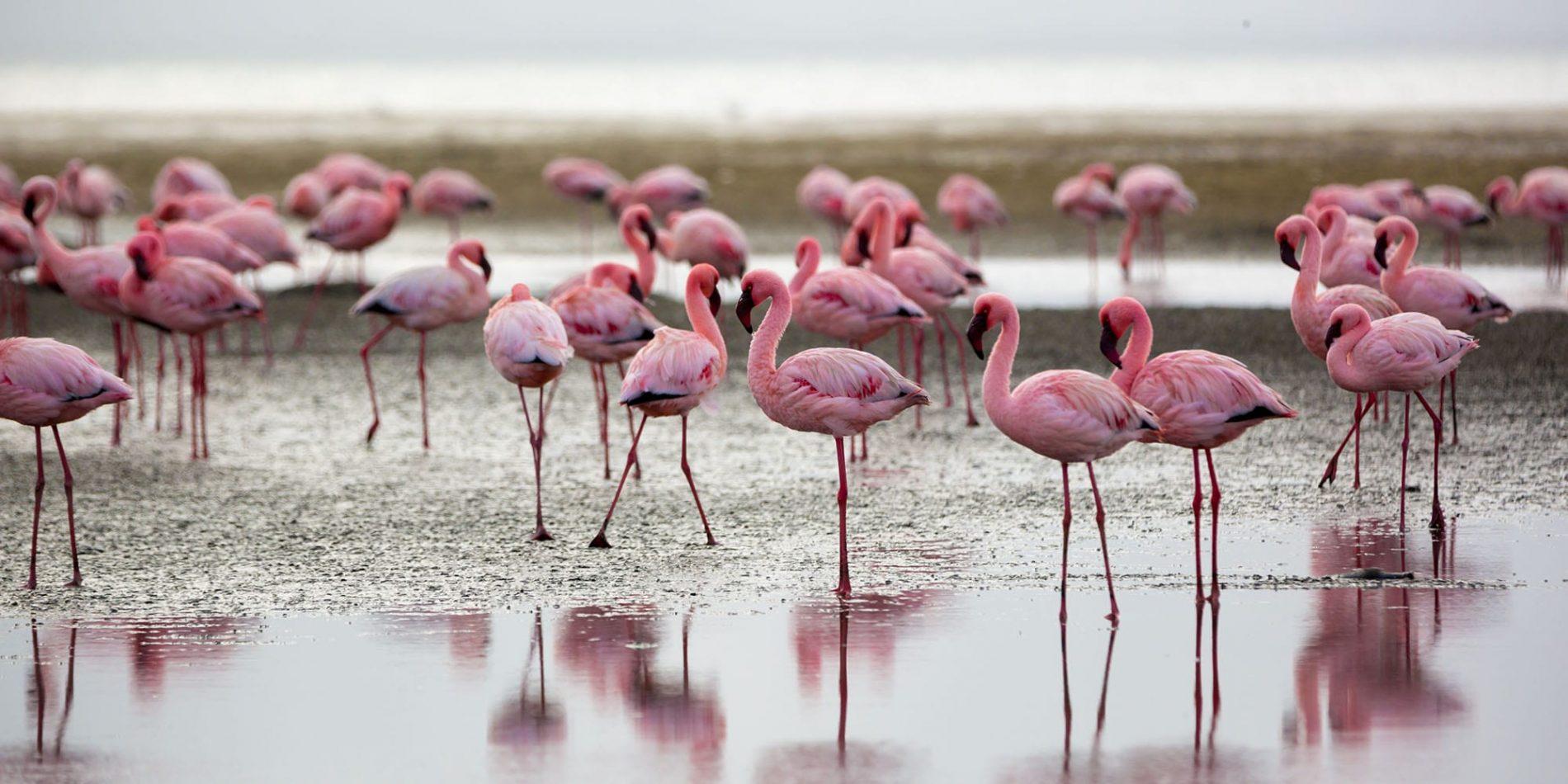 Walvis Bay, Africa